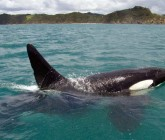 Eco Encounters Sailing Around the Bay of Islands